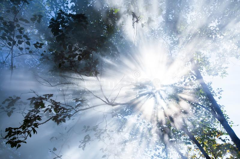 Bottom view, abstract sunrise shining through steam of hot spring in the forest. Art transparent branches of tropical trees and royalty free stock photography