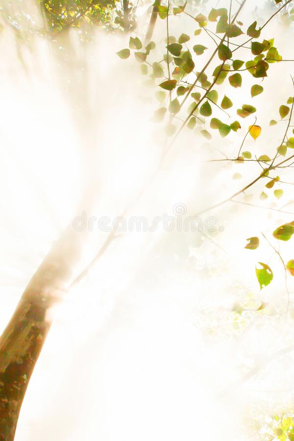 Free Bottom View, Abstract Sunrise Shining Through Steam Of Hot Spring In The Forest. Art Transparent Branches Of Tropical Trees And Stock Photography - 144847092