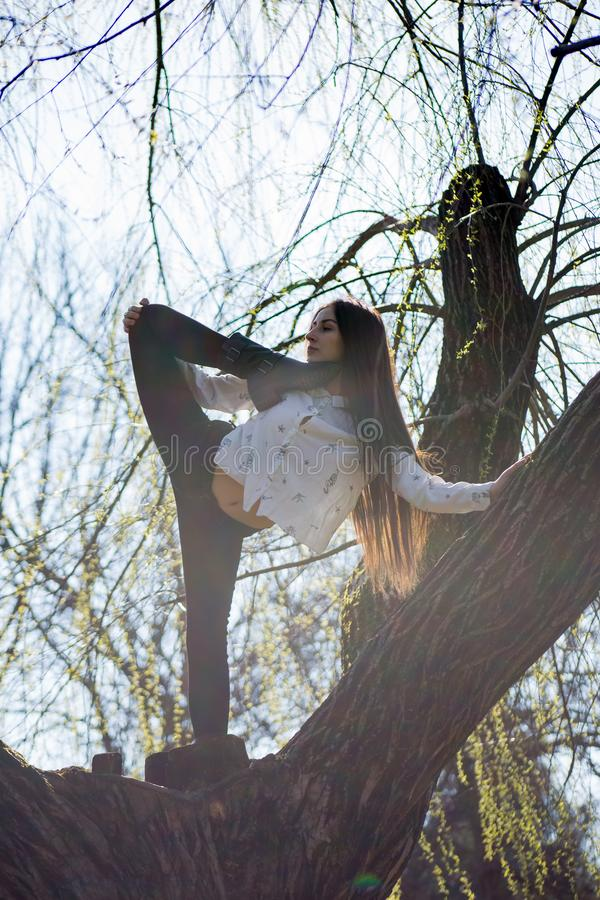 Bottom view charming cute slim girl gymnast is on top of unusual tree without leaves and executes elements of stretching stock image