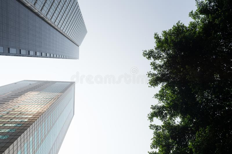 Fresh green and building groups royalty free stock image