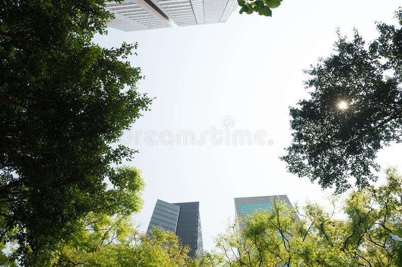 Fresh green and building groups stock image