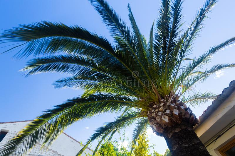 Bottom view of a palm tree sprawling branches over a tiled roof against a blue sky on a summer day stock photo