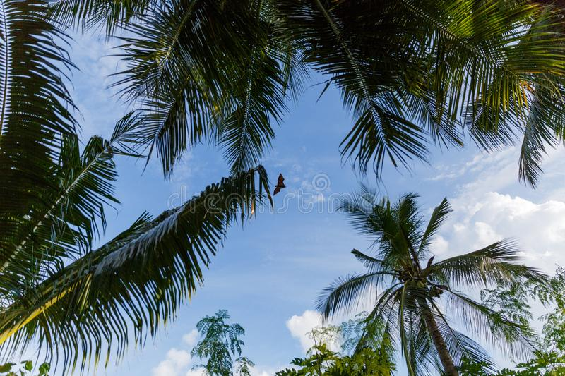 Bottom view of palm trees and cloudy blue sky,. Maldives, thoddoo stock image