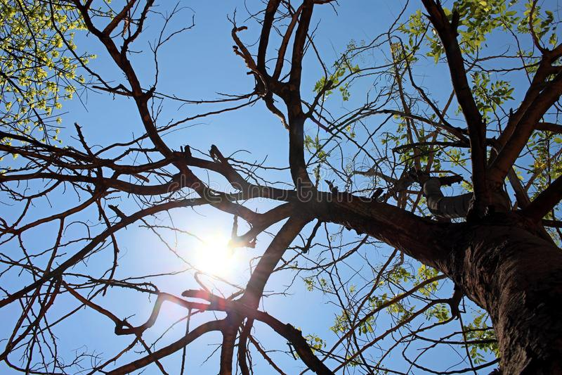 Bottom view to the tree. Sun rays in the tree crown. royalty free stock photos