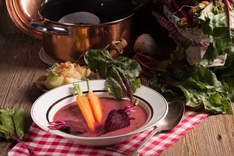 Botwinka - soppa av unga betasidor royaltyfri fotografi