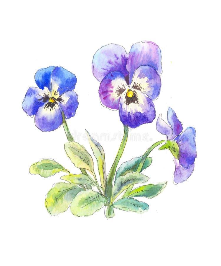 Boucket azul de los pensamientos en acuarela stock de ilustración