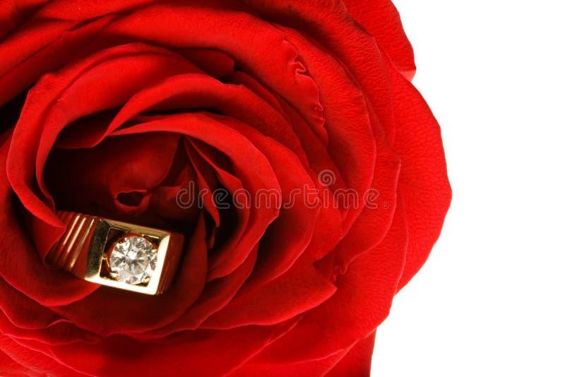 Boucle de diamant dans Rose rouge images stock