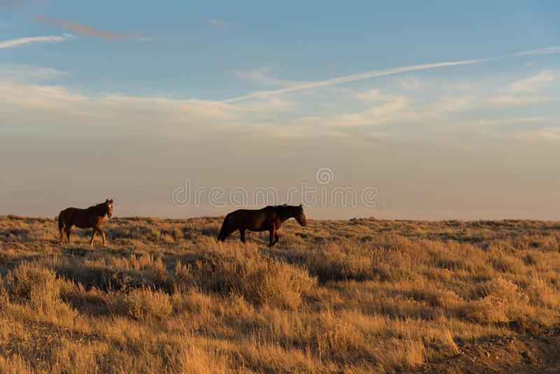 Boucle scénique de cheval sauvage, Wyoming photos stock