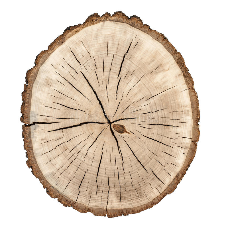 Boucles d'arbre image stock