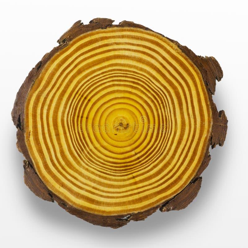 Boucles d'arbre photo stock