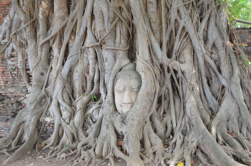 Bouddha font face photos stock