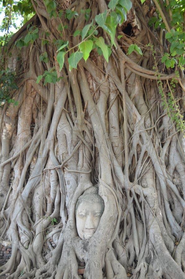 Bouddha font face photographie stock