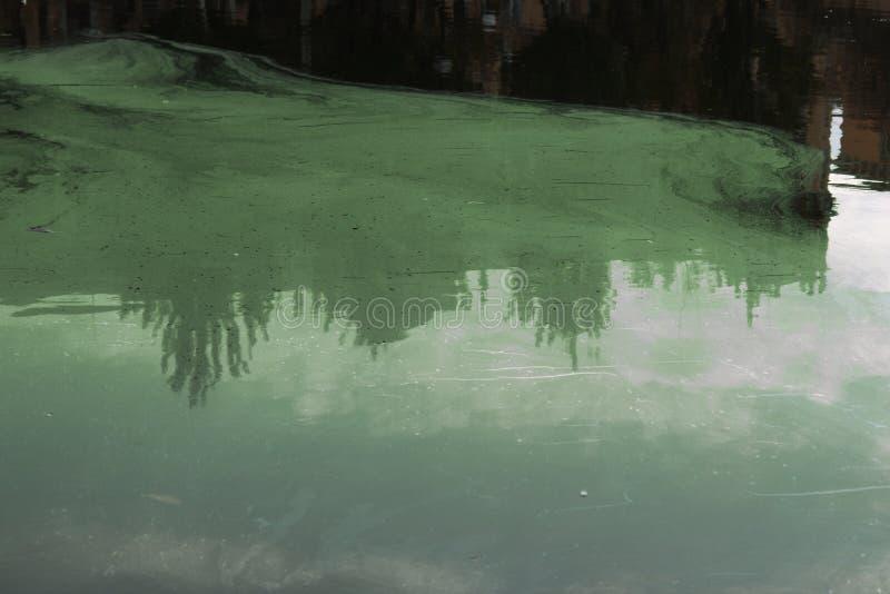 Boue verte dans un étang pollué Déchets toxiques jetés dans l'eau photos stock