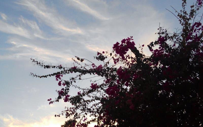 Bougainville mit dem Himmel lizenzfreie stockbilder