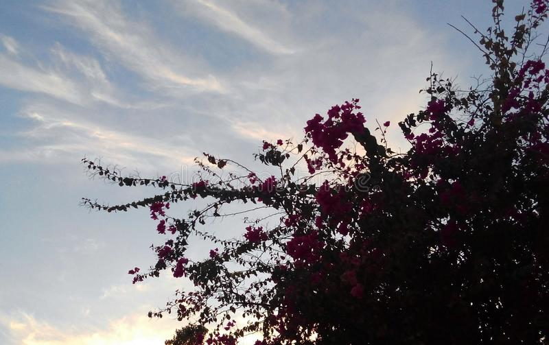 Bougainville z niebem obrazy royalty free