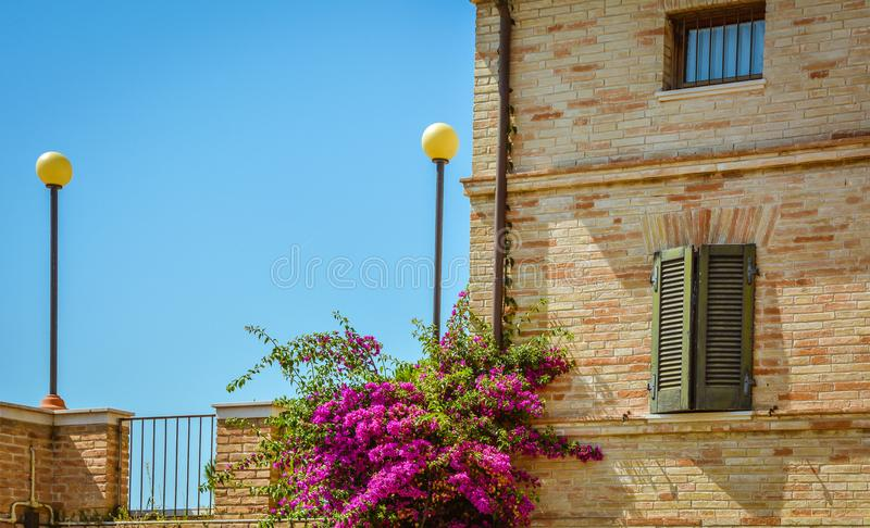 Bougainvillea blooming on the facade of a historic villa in the Tuscan countryside.  royalty free stock photo