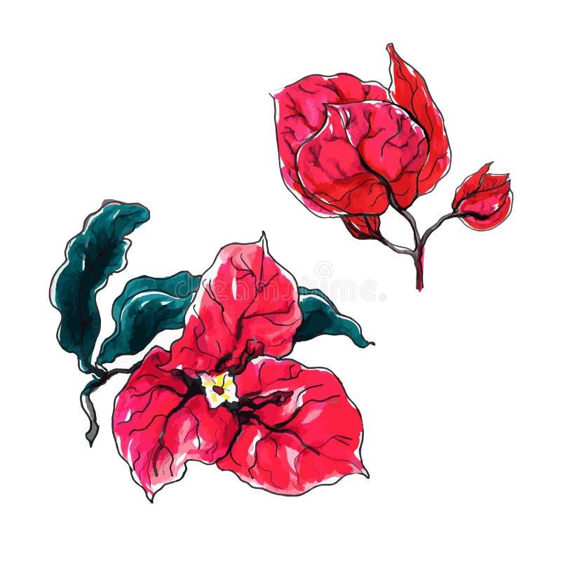 Bougainvillea decoratieve bloem vector illustratie