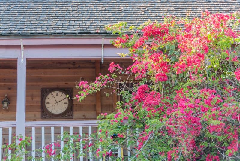 Download Bougainvillea Dekoruje Balkon Zdjęcie Stock - Obraz złożonej z florida, bujny: 57652634