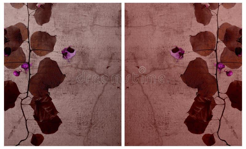 Bougainvillea en conjunto agrietado del fondo de la pared imagenes de archivo