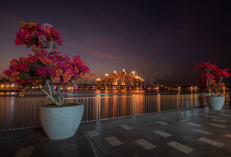 Bougainvillea op de nieuwe promenade Tne die Pointe het Hotel Atlantis overzien Doubai, de V royalty-vrije stock afbeelding