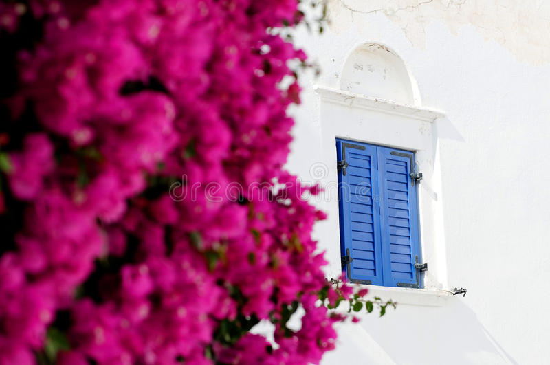Bougainvillea and shuttered window royalty free stock photo