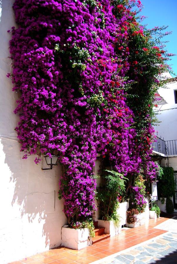 Bougainvillea som upp växer en vägg i den gamla staden, Marbella, Spanien arkivbild