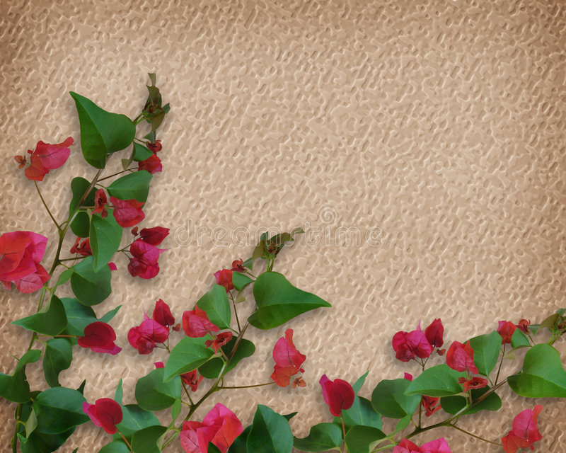 Bougainvillea tropical de las flores libre illustration