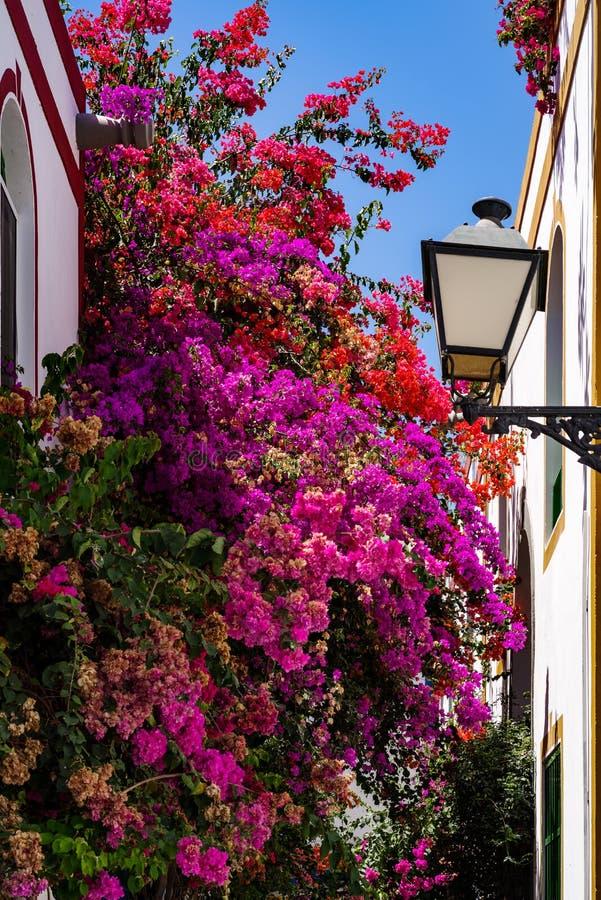 Bougainvillea w Puerto De Mogan, Gran Canaria zdjęcia stock