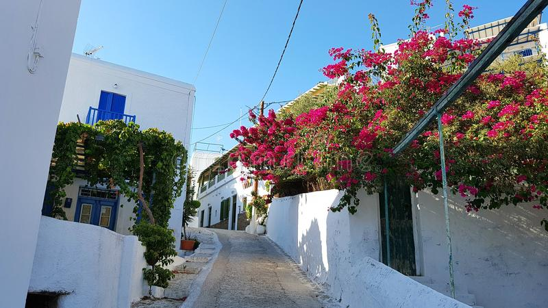 Bougainvilleas and Cyclades architecture stock images