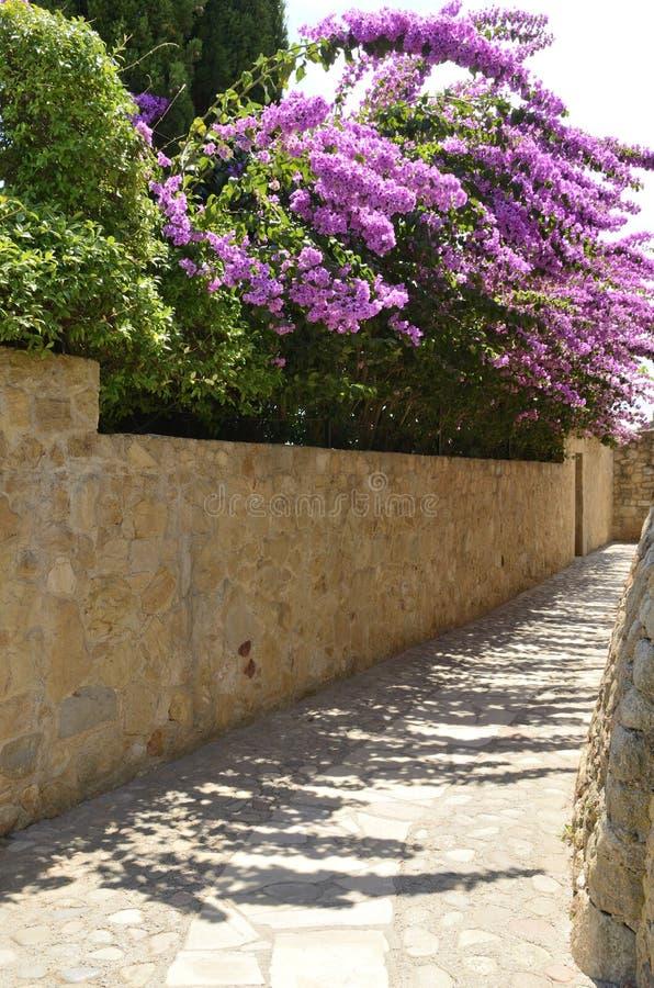 Bouganvillée sur le mur en pierre photographie stock