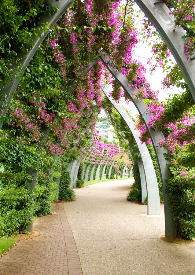 Bouganvilla Archway royalty free stock image