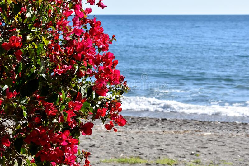 Bouganvilla of red flowers contrasting with the blue sea royalty free stock photos
