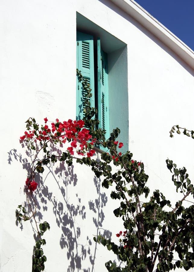 Bouganvilla und Blendenverschlüsse lizenzfreie stockfotos
