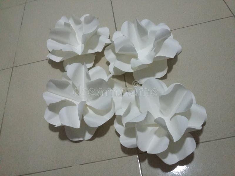 bouganvilla wszystkie piękny kwiat swój papierowi ciernie zdjęcie royalty free