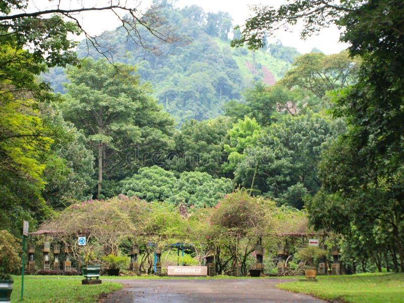 Bougenville trädgård royaltyfria bilder