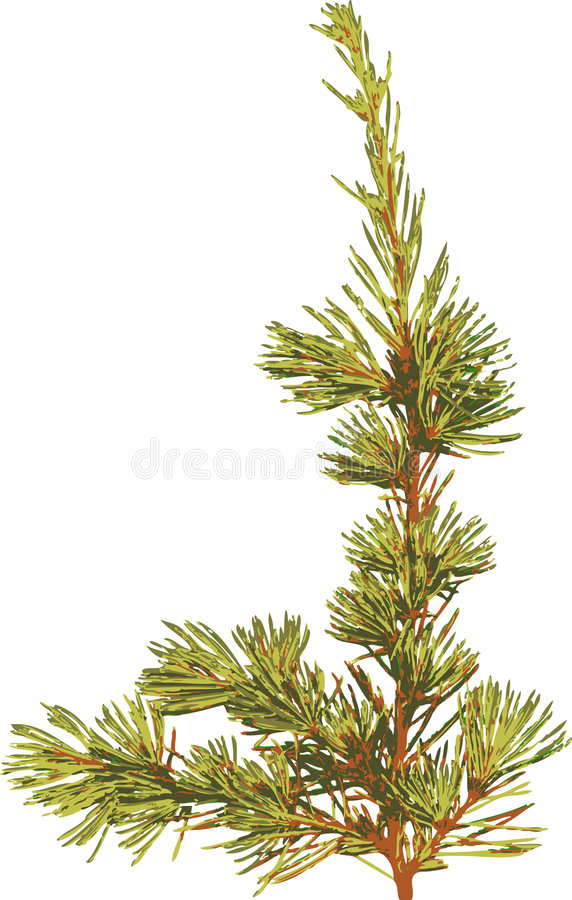Download Bough and Pine Needles stock vector. Image of isolated - 5858225