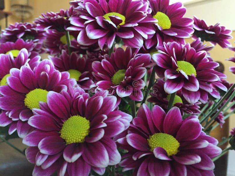Bouguet Fushia和绿色雏菊花 免版税库存照片