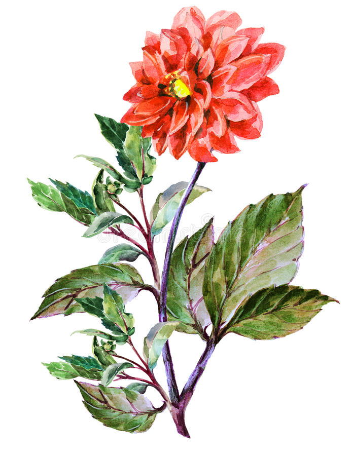 Bouguet rode dahlia, waterverf vector illustratie