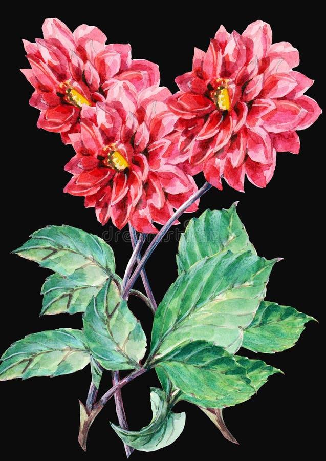 Bouguet van rode dahlia op een zwarte achtergrond, waterverf stock illustratie
