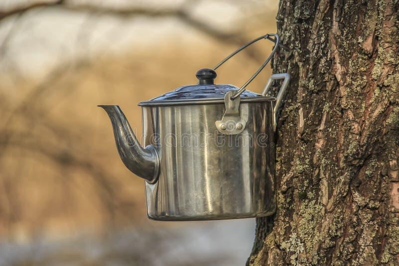 Bouilloire pour le camping de thé images libres de droits