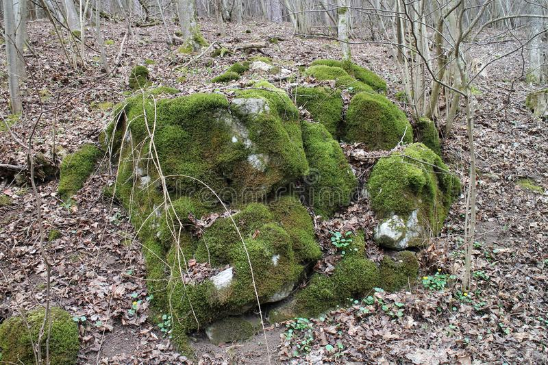 Boulder with moss in forest near Castle of Countess Elisabeth Báthory, Čachtice stock image