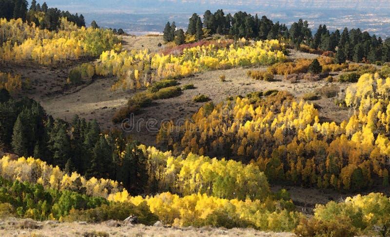 Boulder Mt, Ut - 2016-09-30 Fall Color -01g Free Public Domain Cc0 Image