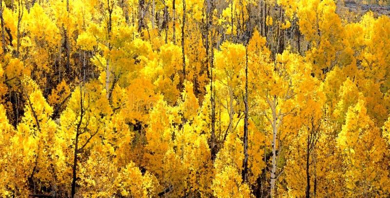 Boulder Mt, Ut - 2016-09-30 Fall Color -24b Free Public Domain Cc0 Image