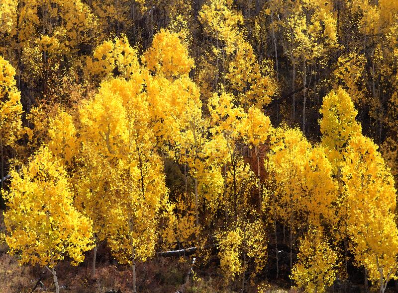 Boulder Mt, Ut - 2016-09-30 Fall Color -22b Free Public Domain Cc0 Image