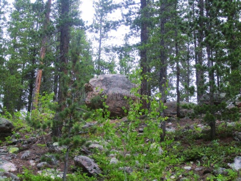 Boulder s'est niché dans la forêt d'Arapaho, le Colorado photographie stock