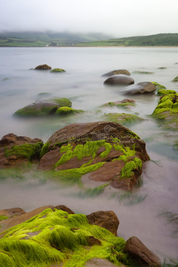 Download Boulders Covered Green Seaweed In Misty Sea Stock Image - Image: 15700039
