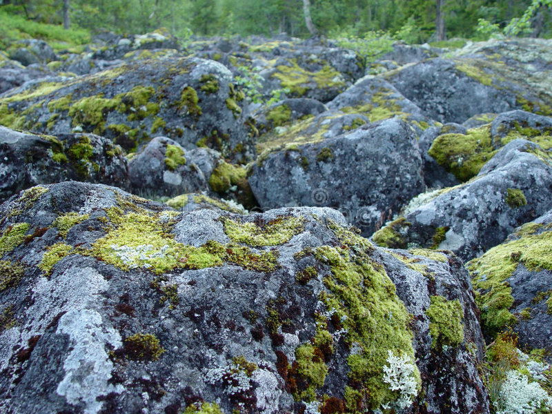 Boulders covered in moss. 1 royalty free stock photos