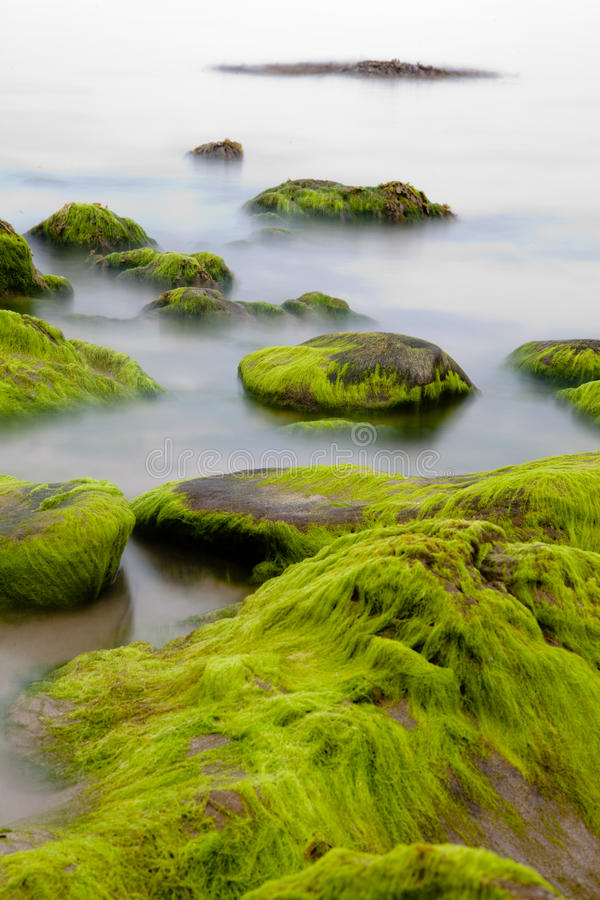 Free Boulders Covered With Green Seaweed In Misty Sea Stock Photos - 15700023