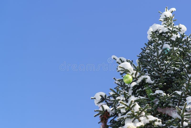 Boule brillante vert clair de Noël et d'autres décorations de Noël sur la branche s'élevant dans le lat neigeux de sapin de parc  photos libres de droits