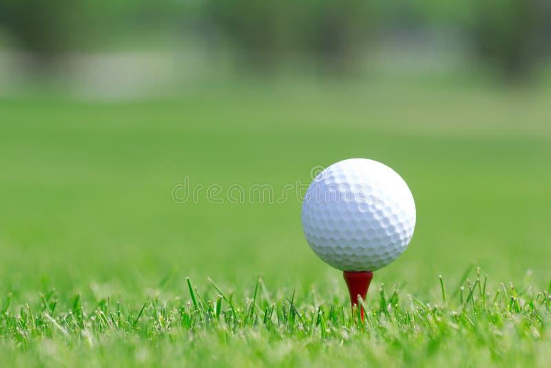 Boule de golf dans l'herbe sur le champ image libre de droits